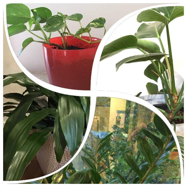 indoor office plants