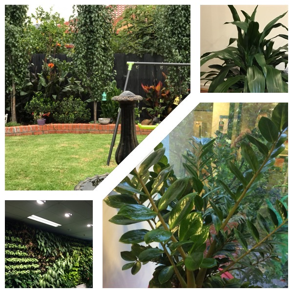 lawn mowing and indoor plant service